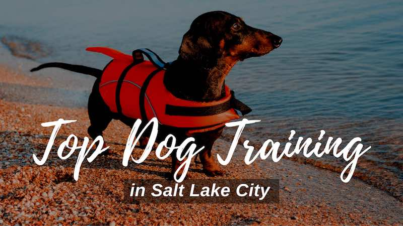 Top Dog Training in Salt Lake City