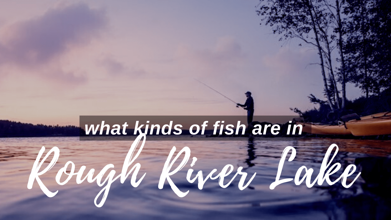 Rough River Lake Fish Kinds